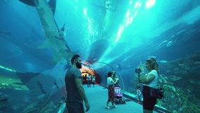People admire the marine life in the glass tunnel of the Aquarium in Dubai Mall stock footage video. Dubai, UAE - April 09, 2018: People admire the marine life stock video footage