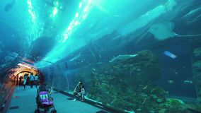 People admire the marine life in the glass tunnel of the Aquarium in Dubai Mall stock footage video. Dubai, UAE - April 09, 2018: People admire the marine life stock video