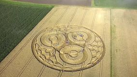 People admire a mysterious crop circle stock video