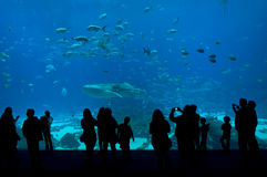 The people in Aquarium. The picture captures the people in Aquarium Royalty Free Stock Photography