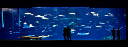 People in an aquarium Royalty Free Stock Photos
