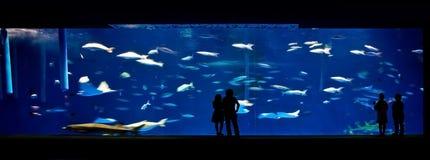 People in an aquarium Royalty Free Stock Photos