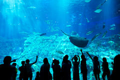People in an aquarium Stock Images