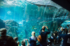 People at the aquarium. People taking pictures of a shark at Brest aquarium - Brittany (France) 07/2016 Stock Images