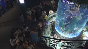 People in the aquarium watching fish in a large aquarium with beautiful blue water stock video