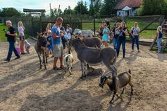 People around animals in Kadzidlowo Park in Poland. Group of visitors of Kadzidlowo AnimalPark in Masuria in northern Poland. Males, females, kids together with stock image