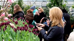 People attend spring flowers market at day time stock video