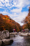 People in autumnal forest Stock Images