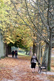 People on Autumnal path. Scenic view of people walking on tree lined pathway in Autumn stock image