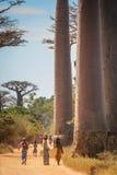 People in the Avenida de Baobab Royalty Free Stock Photo