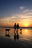 People on the beach. People silhouettes walking on a beach with dogs at sunset Stock Photography