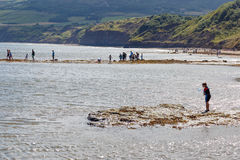 People on beach, fishing and crabbing. Royalty Free Stock Images