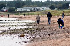 Sea Glass Seekers. People on the beach at low tide searching for sea glass. Water sports, Atlantic Ocean, Souris Stock Photography