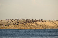 People on the big sand dune Stock Image