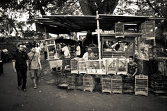 People of the bird markets of Malang, Indonesia Royalty Free Stock Images