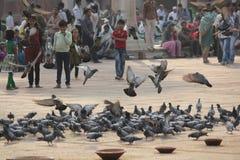 People and birds at Jama Masjid, Delhi Royalty Free Stock Image