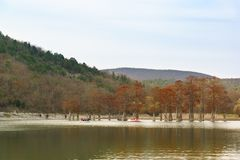 People boating around Taksodium two-rowed, or Swamp cypress lat. Taxodium distichum in lake sukkah at the foot of the mountains Stock Photography