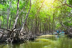 People boating in mangrove forest, Ria Celestun lake, Mexico royalty free stock photography