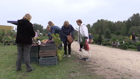 People buy apple, plum, nut and other ecologic food from farmer. KAIRENAI, LITHUANIA - SEPTEMBER 19, 2014: Customers people buy apple, plum, nut and other stock video