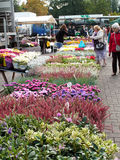 People buying autumn flowers on a Belgian market. Royalty Free Stock Photo