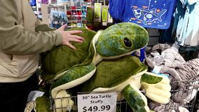 People buying sea turtle stuffy inside Vancouver aquarium stock video