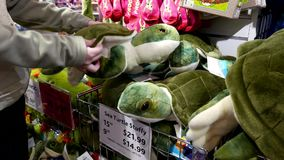People buying sea turtle stuffy inside Vancouver aquarium. Gift shop stock footage