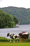 People in a caleche at Muckross Park, Killarney, Ireland. Caleche with passengers on its way in the woods Muckross abbey, Killarney/Ireland in spring Royalty Free Stock Image