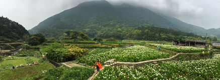 People on the calla lily field in Yang Ming Shan Park, Taiwan Royalty Free Stock Images