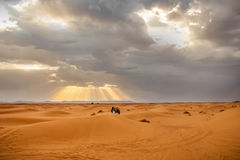 People on camels in the Sahara desert at sunset background Stock Photography