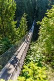 People on Capilano Suspension Bridge amongst trees stock images