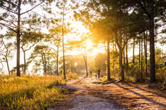 People carry bike along  trail way with sunset in jungle Stock Photography