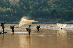 People catch fish by lift net on ditch Stock Images