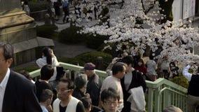 People celebrating the cherry blossom at Kudanishita in Tokyo