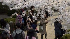 People celebrating the cherry blossom at Kudanishita in Tokyo stock video