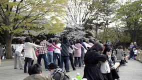 People celebrating the cherry blossom at Yoyogi park in Tokyo stock footage