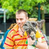 People of Chile. SANTIAGO, CHILE - NOV 1, 2014:  Unidentified Chilean man hugs a lama in the street. Chilean people are mainly of mixed Spanish and Amerindian Stock Photos