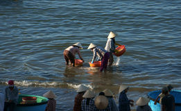 People clean seafood on beach Royalty Free Stock Photography