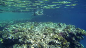 People in clear deep blue sea water swimming stock video