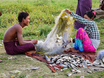 People collect fishes after catching in Mandalay, Myanmar Royalty Free Stock Photos