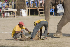 People collecting elephants droppings, during elephant polo game, Thakurdwara, Bardia, Nepal Stock Image