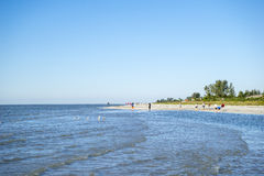 People Collecting Seashells on a Beach #1 royalty free stock photos