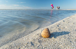 People Collecting Seashells on a Beach #3 Royalty Free Stock Photo