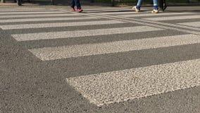 People cross road by zebra crossing in sunny autumn day. People cross road by zebra crossing in sunny autumn. Pedestrian foot thwart the road by crosswalk stock video