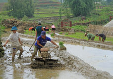 People are cultivating the paddy field Stock Photo