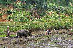 People are cultivating the paddy field Stock Photography