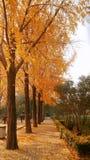 People& x27 de Zhengzhou; parque de s imagen de archivo libre de regalías