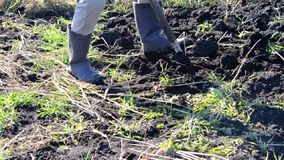 People dig the ground by hand. Close-up stock footage