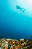 People diving. Divers interacting with wildlife in the reefs of the sea of cortez, Mexico Royalty Free Stock Photography