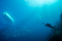 People diving. Divers interacting with wildlife in the reefs of the sea of cortez, Mexico Stock Photos