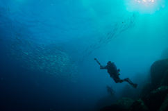 People diving. Divers interacting with wildlife in the reefs of the sea of cortez, Mexico Royalty Free Stock Image